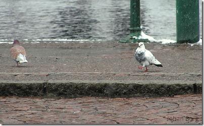 Bird walk cropped